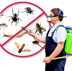 Do You Have a Pest Problem You Need to Find a Solution To?