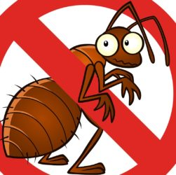 Get Rid Of Unwanted Pests from Your Lawn