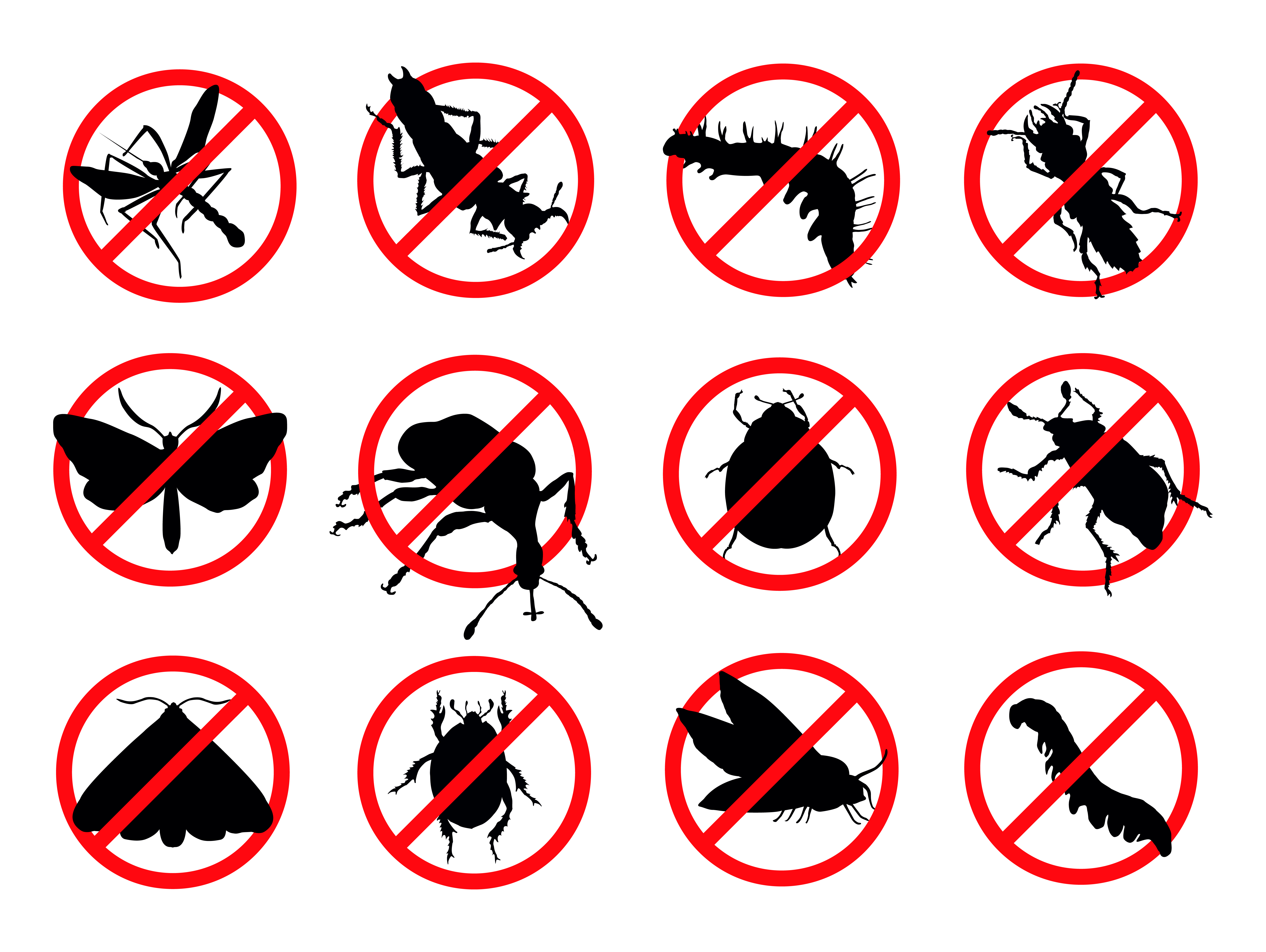 Keep Your Home Carpenter Ants Free with Pest Control Services