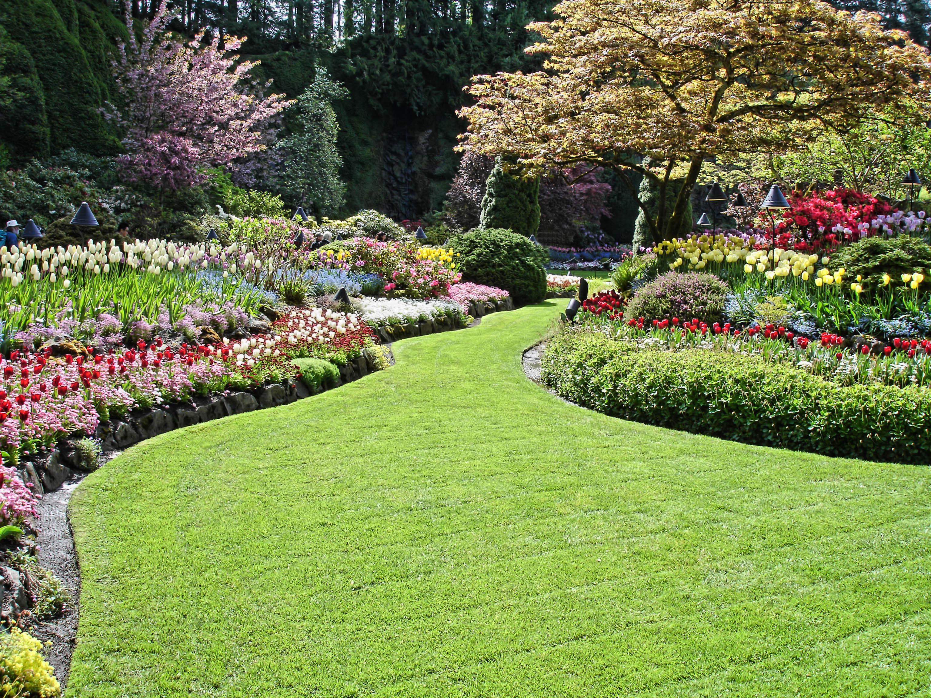 Things To Do Before Installing Artificial Turf In San Diego